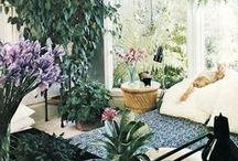 Home   Indoor Jungle