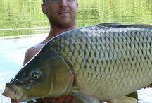 My carp (Fishing)