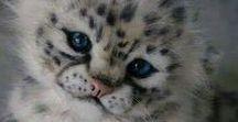 Chats, j'adore / Pleins de beaux matous