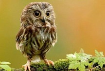 Owl-tastic  / by Kimmy Stoll
