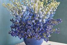 plants e flowers