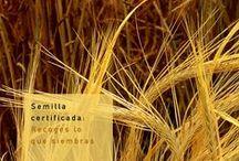 Frases e imágenes que te inspiran / Imágenes y frases que tienen relación con el uso de la semilla certificada