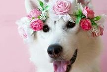 Cute Animals / Picture of adorable pets! Aways makes my day better!