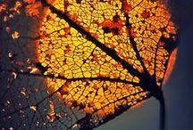 Autumn - fall