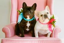 Pooches at Weddings / More and more couples are including their loving pets as part of their big day. Found some very cute images that are sure to make you smile