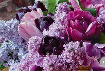 Lovely Lavender Wedding Decor