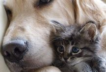 Cats - and Dogs / Feline and canine friends