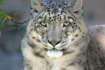 Other Beautiful Creatures (Other than Domestic Cats) / Beautiful and amazing creatures, other than domestic cats