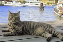 Cats - Around the World / Cats from all over the globe