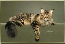 Cats - Maine Coons and MC Mixes / Photos of Maine Coons and Maine Coon-mix cats