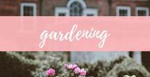 Gardening / Gardening tips and how to's to create a beautiful garden.