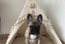 Créations pour chien