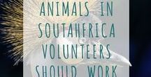 Beautiful animals in South Africa Volunteers should work with / Beautiful animals in South Africa Volunteers should work with
