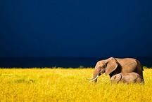 Our Kin (Wildlife Photos) / by Andrea Bella Terra