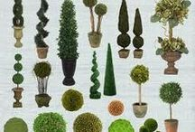 topiaries / by April Bly