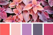 Colour Palettes / My favourite colours - yes all of them  Colour is everything - everything is colour