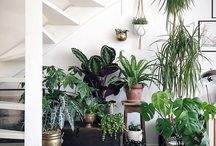 House Plants / Claiming and using great inspiration from green spaces inside houses. Great tips on what house plants to own and how not to kill them!