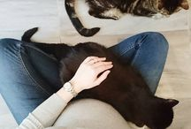 Cats / My cats and other  cuties