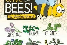 Conservation / A collection of tips to help look after the world and creatures around us