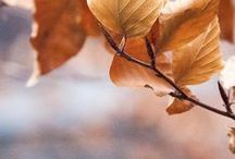 autumn. / A few good things about cold weather........