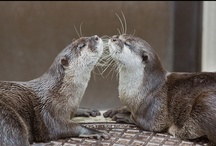 I Otter Be In Pictures