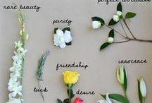 Kalo DIY flower decoration / x 6 small bridesmaids bouquet x 1 bride bouquet for me x 8 boutonniere  x 12 - 15 bunch of flowers for dinner table decorations x 10 bunch of flowers for ceremony decorations