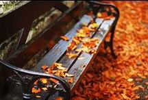 Autumn Leaves / Autumn is my favourite season. / by Christine Bode