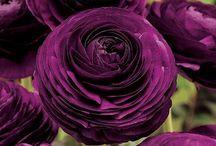 purple / by Martha Arrington