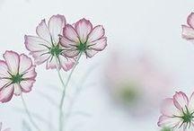 Flower Power / Earth laughs in flowers. -Ralph Waldo Emerson / by Priscilla Fairchild
