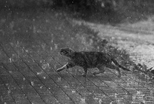 """Rainy Days / """"I used to wish my days were sunny, warm as honey, now, it's funny... / by Priscilla Quinlan"""