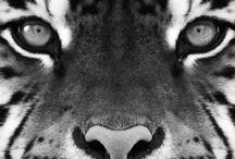 Animal Talk / by Jackie Smith