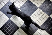 Black Cat / by Priscilla Fairchild