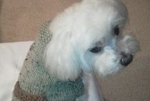 "FREE KNIT & CROCHET DOG SWEATERS  FOR ZAK / ~Sweaters for  ""ZAK"" our Maltese~  ALL  FREE PATTERNS AND DOGGIE TREATS TO MAKE...unless posted INSPIRATION / by Irma Olson"