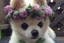 Pets: Fur Baby