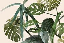 botanische prints & DIY / Illustraties en prints voor posters van cactussen, insecten en andere natuur.