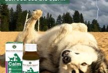 Calm / Natural support for your pet's nervous function Calm is a state of inner peace and tranquility. However, some pets display signs of nerves and general anxiety. Our Calm product is an easy to use liquid supplement designed to maintain normal nervous function for your pet's overall balance and wellbeing.