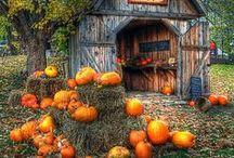Halloween , Its A Fall Kinda Thing.. / by Ryann Heston