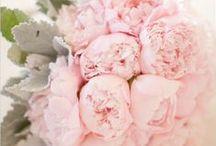 Wedding / by Alecia Kay