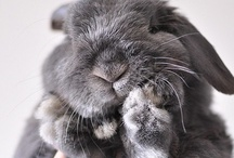bun buns / #bunnies #rabbits  (the thing I love most in this world)