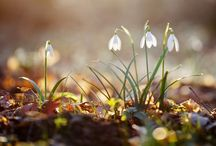 Imbolc - The Promise of Spring / by Sabrina Divina