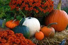 fall festivities / by Megan Morgan