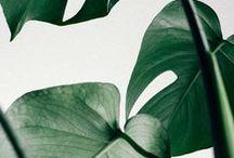 Habitat | Green inspiration / Adoptez la tendance végétale!  En céramique ou en verre, nos vases sont issus d'un savoir-faire artisanal qui rend unique chaque objet. Véritable élément décoratif, les vases conjuguent design et qualité de matières pour sublimer vos fleurs.