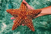 """Ocean Life / """"We have more to learn from animals, than animals have to learn from us."""""""
