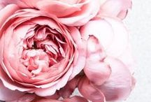 *flowers* / *fleurs*