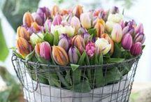 Fleurish / Flowers