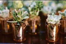 Wedding Favors / Looking for wedding favors? Search no further. These wedding favor ideas are great for modern weddings, rustic weddings and every style of wedding in between.