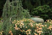 My Garden Tour... The Graceful Gardener
