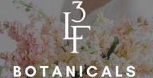 BOTANICALS / Local, Colorado Wedding Flowers