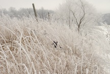 Winter is beautiful when it looks like this / by Leah Rosch