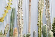 Botanical | Plant Life